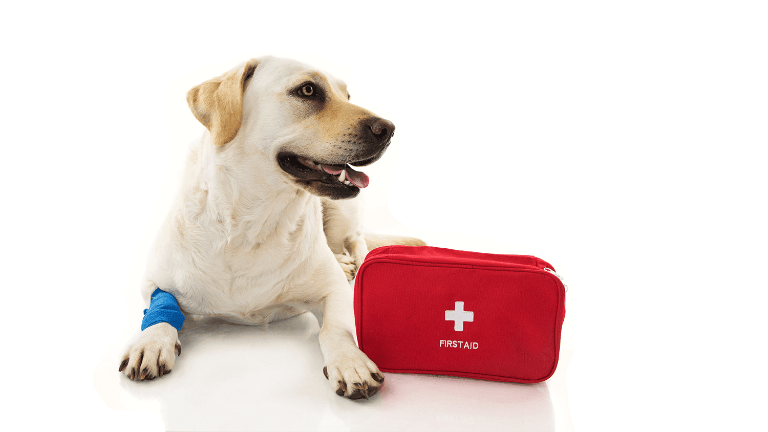 Pet First Aid / CPR